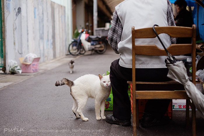 putin_owner_nekoyuhi1656882