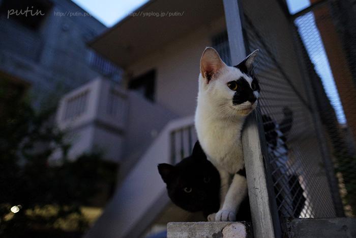 putin_owner_nekoyuhi168463102566