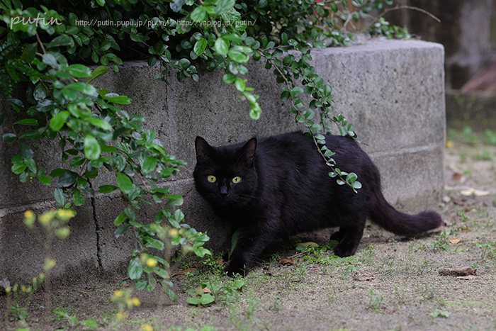 putin_owner_nekoyuhi168720056