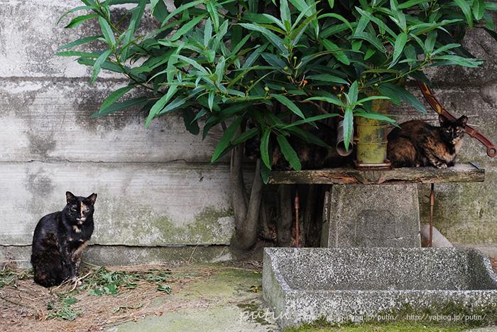 putin_owner_nekoyuhi1116669641